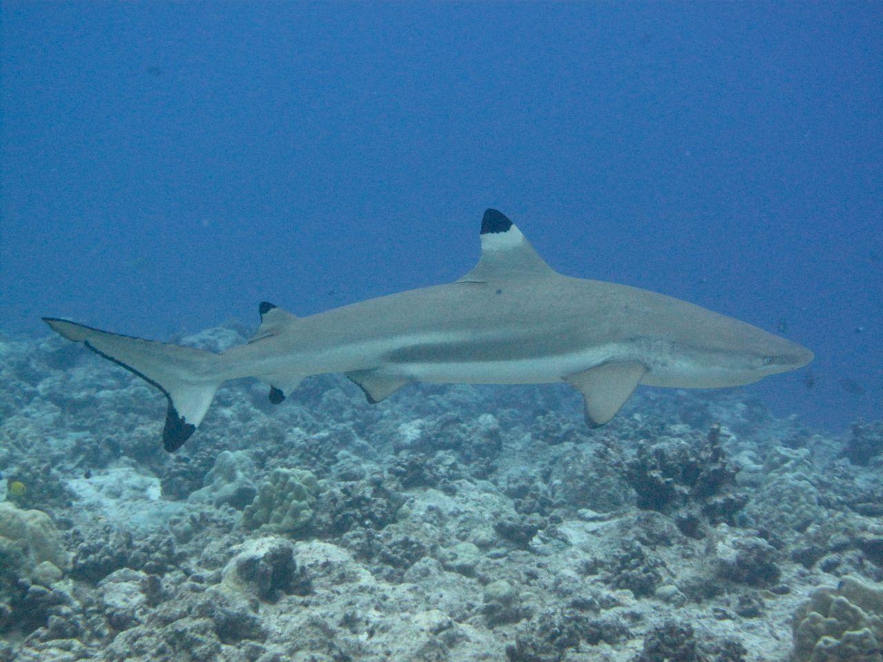 nurki na Bora Bora