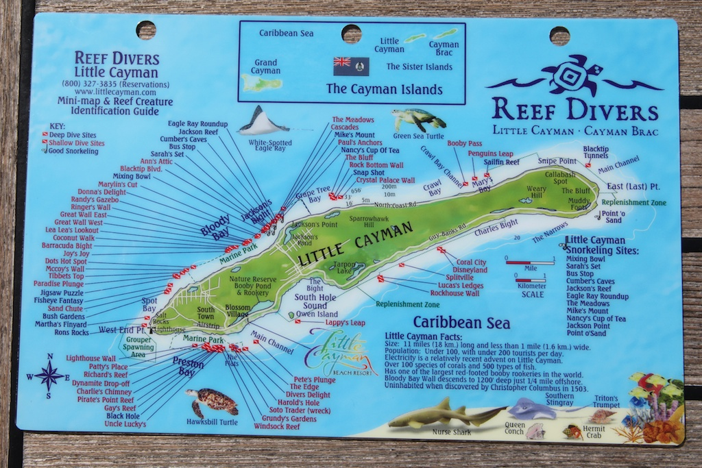nurki na Little Cayman