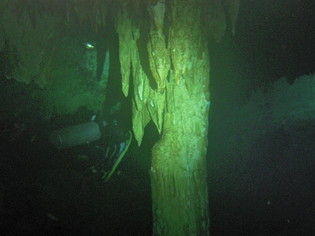 Podwodny świat jaskiń na Jukatanie – Cenotes