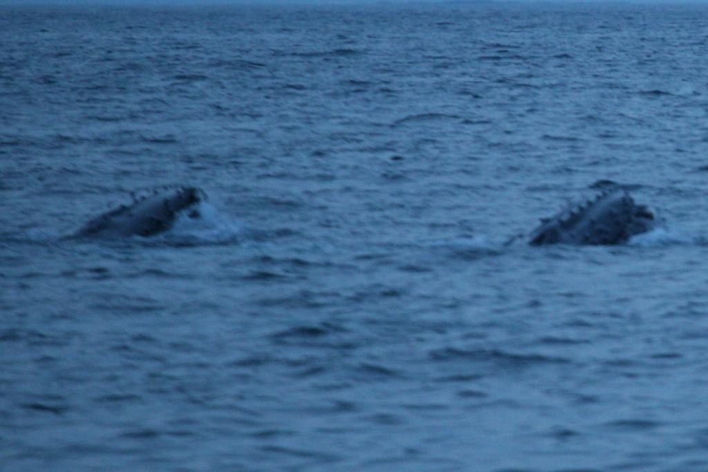 Dopływamy do Ilulissat w Disko Bay