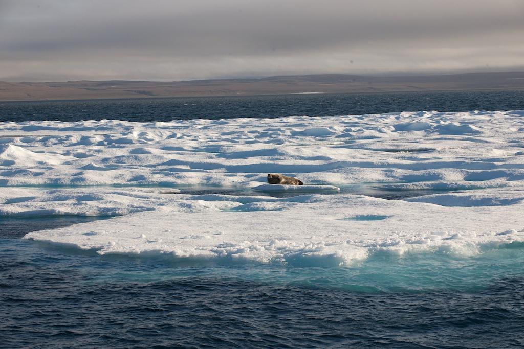 Dwukrotne przejście Cieśniny Bellota – lód i niedźwiedzie w Fort Ross