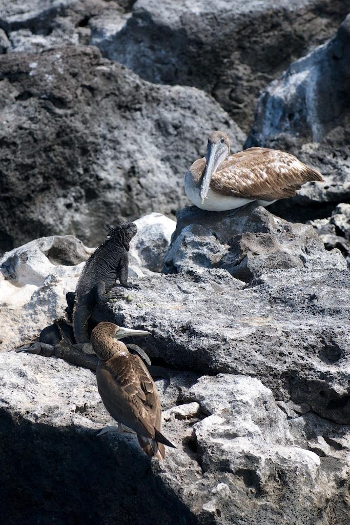 Galapagos – ponowne odwiedziny
