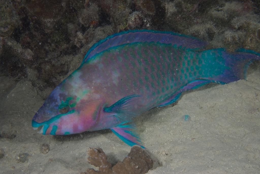 Majowe nurkowania na Bora Bora