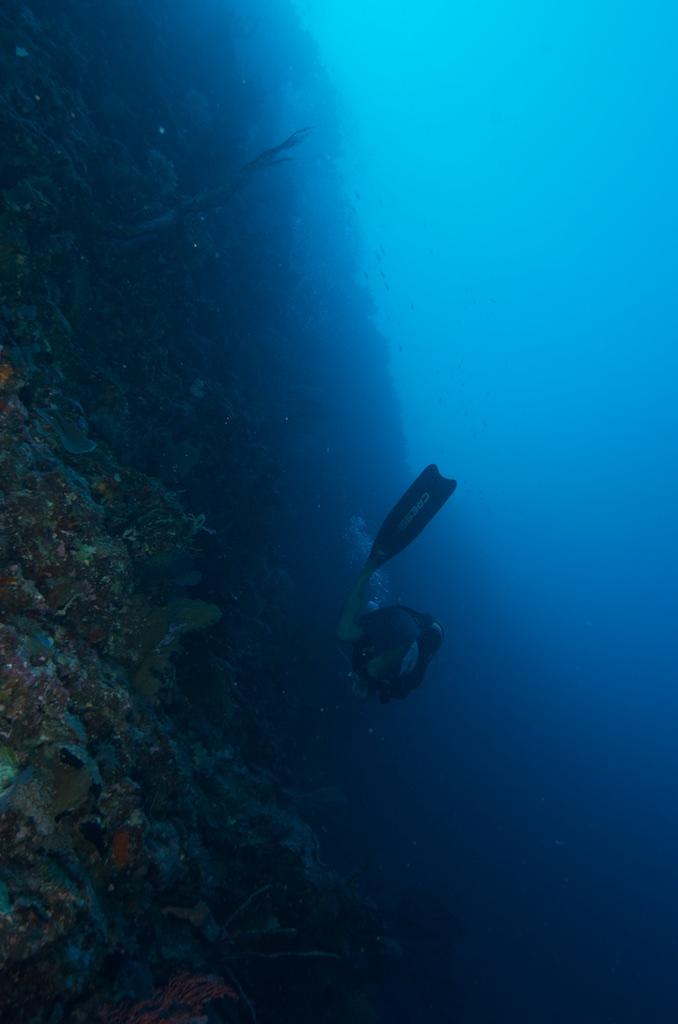 Świat podwodny Palau