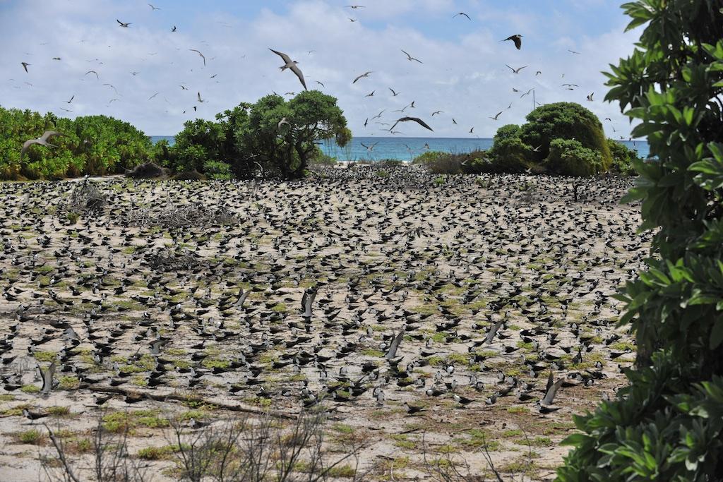 Ptasia Wyspa